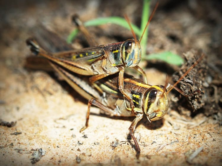 Raising insects for food